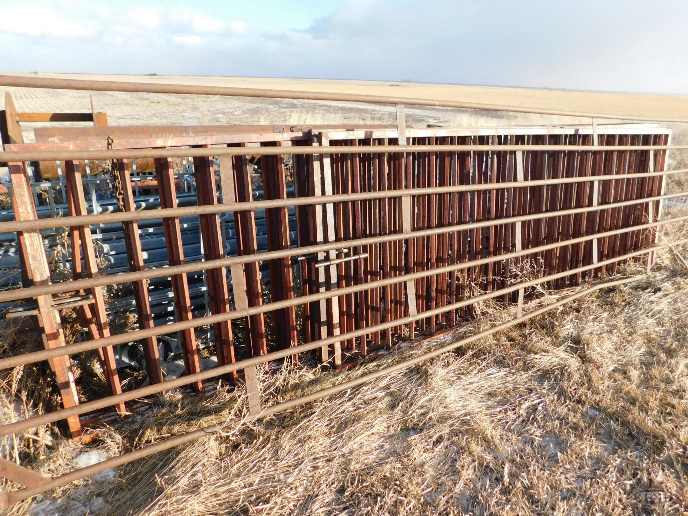 (5) 16' steel portable cattle gates