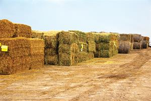 Hay Auction1.jpg